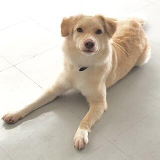 茶色い目の小柄なゴールデン系美女11ヶ月ぐらい