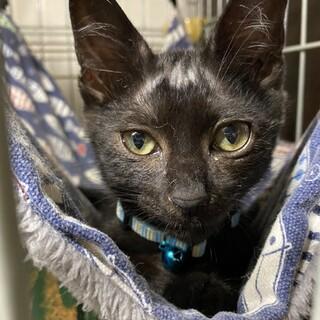黒猫 ゼロ君