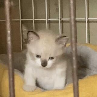 生後1ヶ月の4匹の子猫達