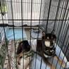温和な柴犬シニアの男の子 定春です サムネイル4