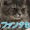 仮名 ファンタ♂ サムネイル4