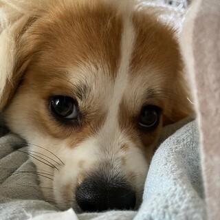 MIX犬 おとなしく優しい癒し系