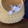頭に隠れミッキーが♡ちょっぴり怖がり2ヶ月弱♀ サムネイル4