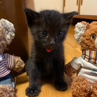 すごく人懐こい⭐️黒猫女の子ジジ