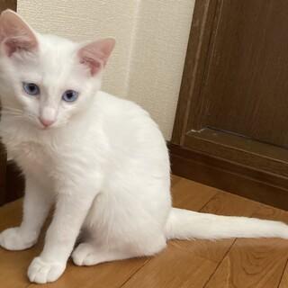 可愛い〰白猫と黒猫の兄弟