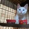 可愛い〰白猫と黒猫の兄弟 サムネイル3