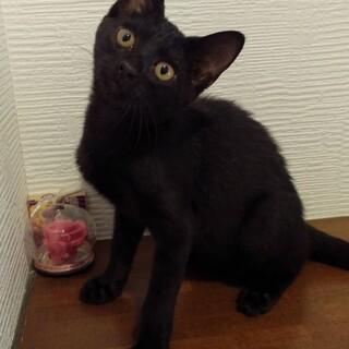 黒猫ちゃん 女の子 男の子