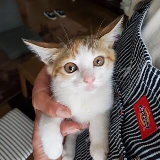 人懐っこい三毛猫キキちゃんは倉庫で産まれました。
