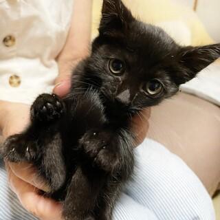 すみちゃん ~姉妹で保護された黒猫の女の子~
