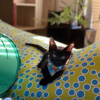 やんちゃ黒子猫♂