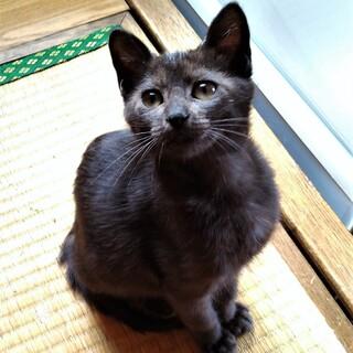 黒猫【サザエ】推定2021年4月下旬生・メス