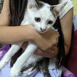 かわいい仔猫です★
