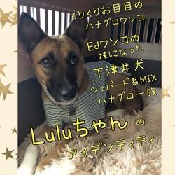 Luluちゃんのアイデンティテイ