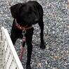 センターより保護 ハウンド系 子犬 推定10か月 サムネイル4