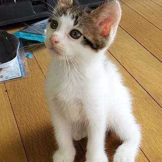 人馴れバッチリ 可愛い 子猫