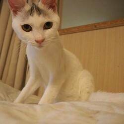 板橋区猫の譲渡会 サムネイル1