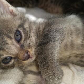 単身者、高齢者、外国籍の方、可。1ヶ月半子猫。キ