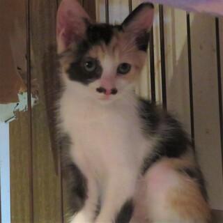 芸術家と6匹の兄妹猫・ミーコちゃん、医療しつけ済