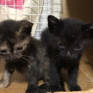 可愛い黒猫ちゃん達5匹(黒4.匹 サビ1匹)