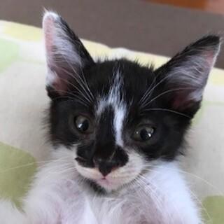 およそ生後2ヶ月の白黒猫
