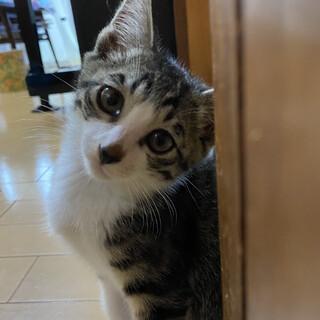 猫なのにわんこっぽいジョンくん