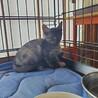 【募集停止】側溝の中で5日間、鳴き続けた子猫 サムネイル3