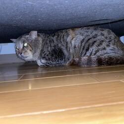 保護猫ちゃんの懐かせ方が分かりません。