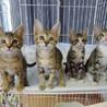 【動画】猫風邪による目の治療を頑張った4兄妹