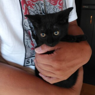 【代理投稿】黒子猫女子の里親さん募集