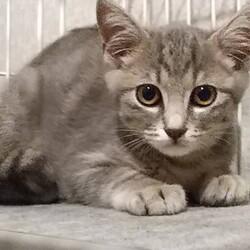 保護猫の譲渡会in守山