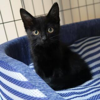 黒猫のヒヨウくん