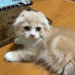【多頭飼い】先住猫と新入り猫の喧嘩についてサムネイル