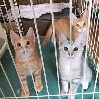 生後2か月の6匹の子猫の里親募集