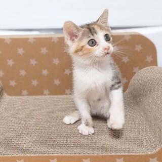 さくらちゃん ~まだ幼い1か月半の三毛猫の女の子~