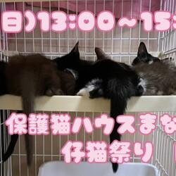 保護猫ハウスまなねこ仔猫祭り〜in京都✩.*˚