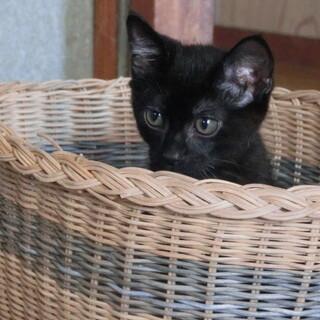くっつきたがりの黒猫 こてつ君