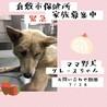 緊急!倉敷のママ野犬をよろしく!