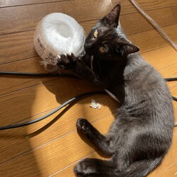 「里親募集中黒猫ちゃん(仮 あんこ)のやらかし日記」サムネイル2