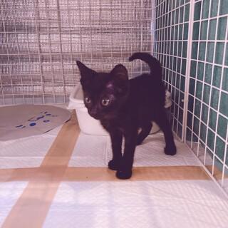 おとなしいけど人懐っこい黒猫ちゃん⭐︎