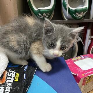 子猫 里親募集 家の前に捨てられてました。