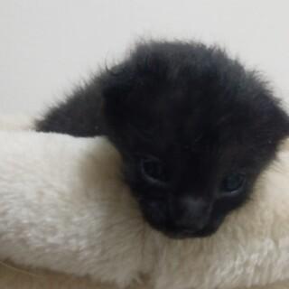 甘えん坊の黒猫さん コロコロしてます!