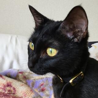 F29 黒猫の女の子