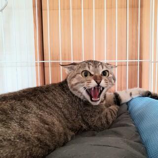 シャーシャー威嚇の猫ちゃん