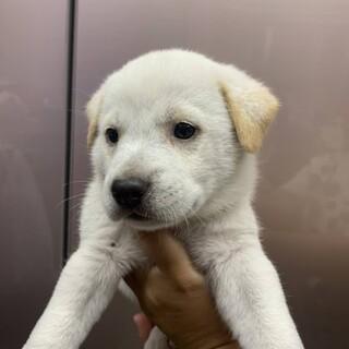 仮名 スノウくん 野犬の子犬を保護しました
