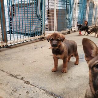 センターよりレスキューした母犬から産まれた仔犬