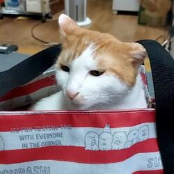 「バッグにも入るんです。」サムネイル1