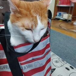 「バッグにも入るんです。」サムネイル2