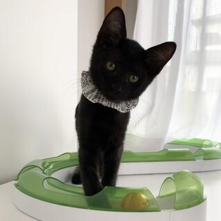 甘え上手な黒猫男の子★ヒナタくん