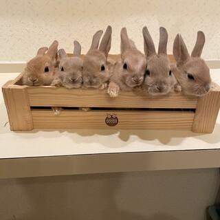 赤ちゃんウサギです