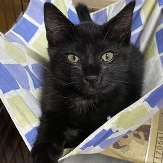 人も猫も大好き!ヤンチャな黒猫そう君♡